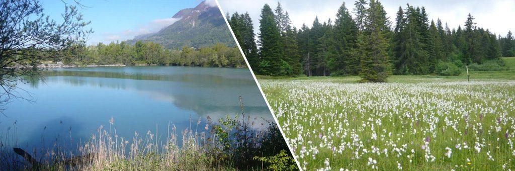 Aider à l'acquisition foncière de zones humides et d'alpages en lien avec les communes
